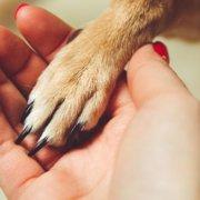 Cani e apparecchi acustici