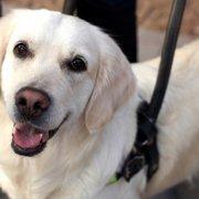 I cani che aiutano chi soffre di ipoacusia